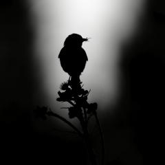 Gallery Black and Wild © Jonathan Lhoir