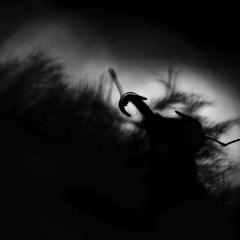 Gallery Fauna Garriga © Jonathan Lhoir