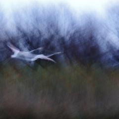 Gallery Follow us © Jonathan Lhoir