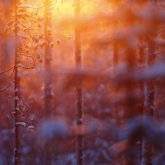 Sunrise Kuusamo Finlande