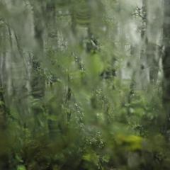 Gallery In Praise of Plants © Jonathan Lhoir