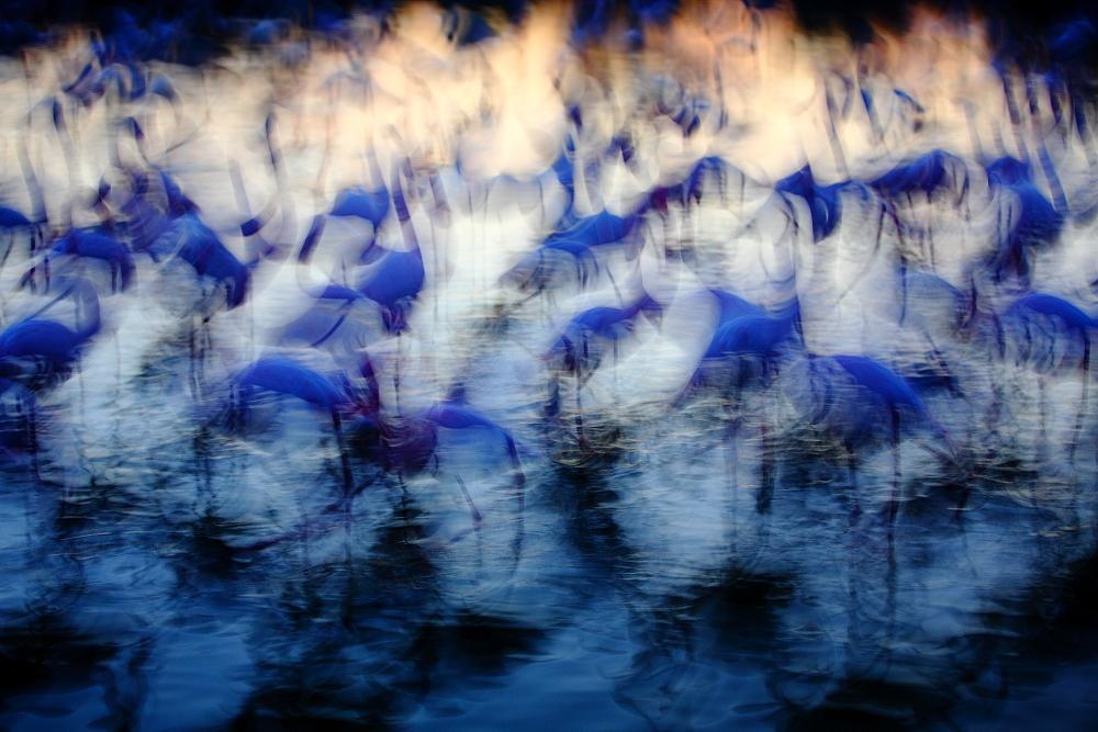 Stage oiseaux de Camargue