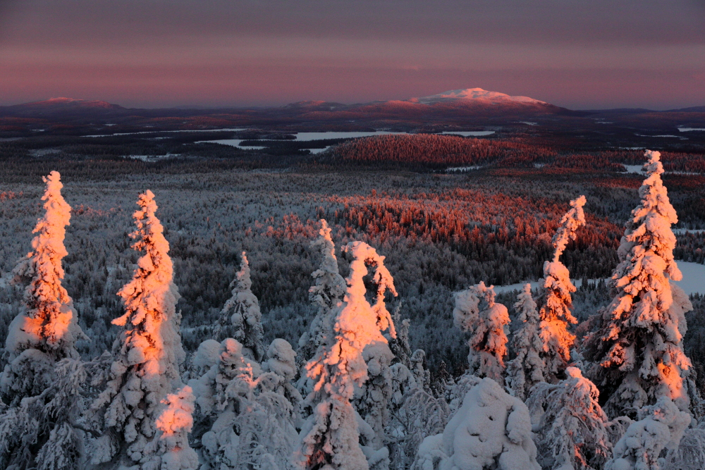 Voyage photo en Laponie finlandaise