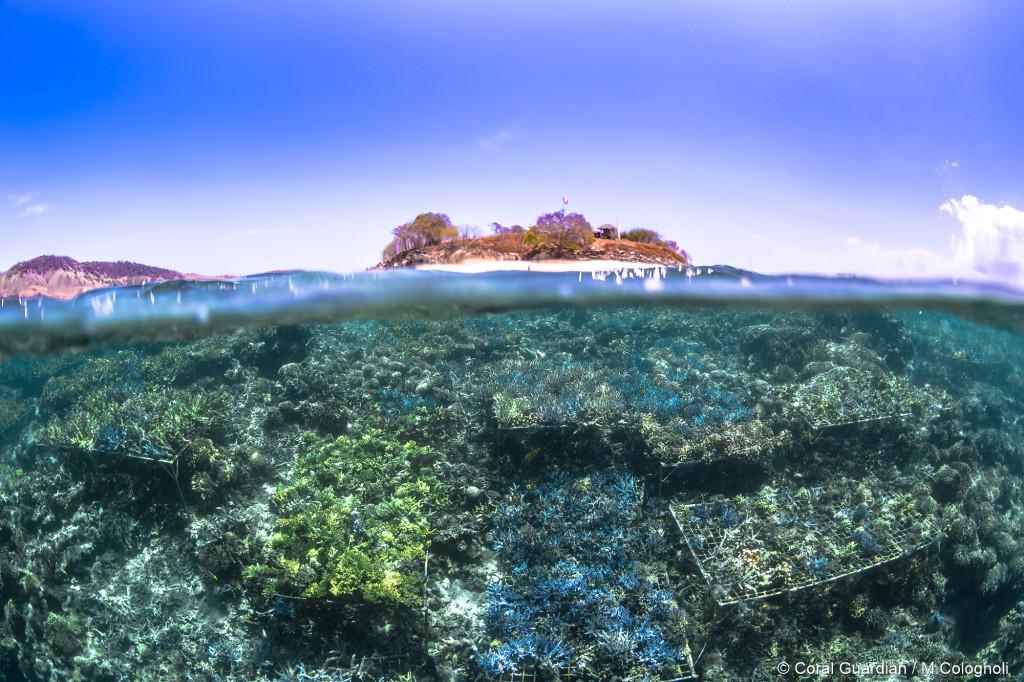 Voyage photo en Indonésie
